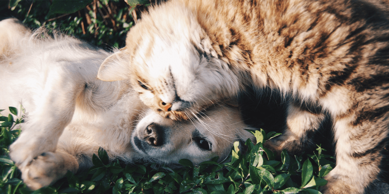 dog playing with cat