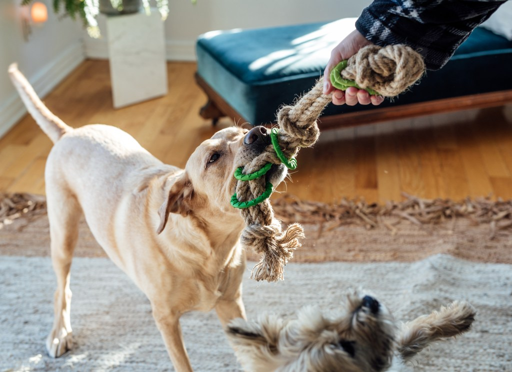 tug of war give your dog more exercise
