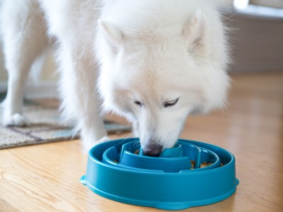 slow feeding your dog from a slow feeder