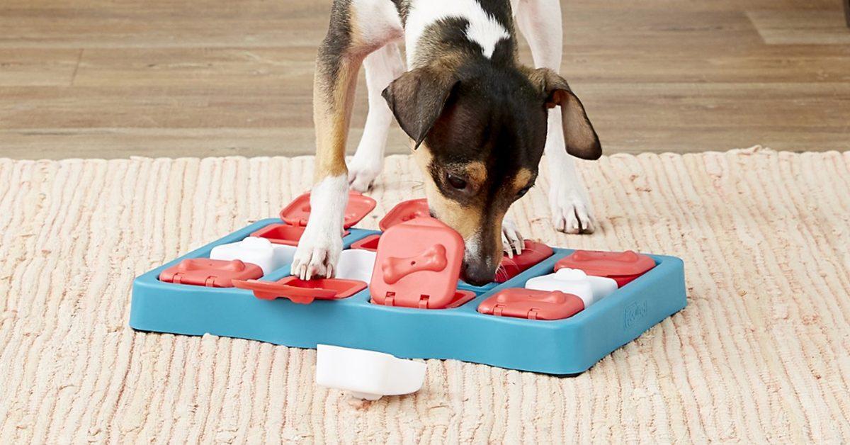 dog using a dog puzzle