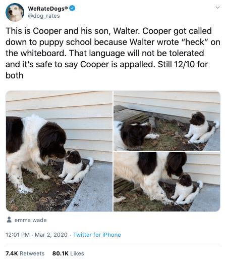 doggolingo tweet