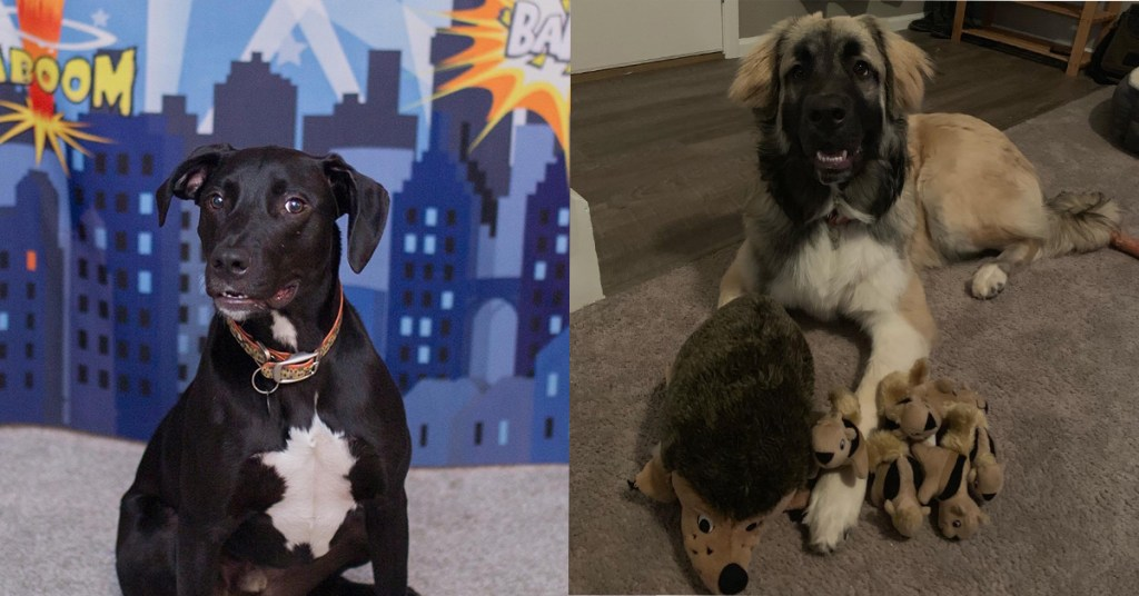 Meet our office dogs