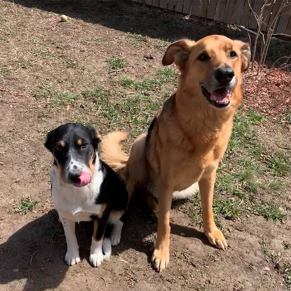 co-woofers-norman