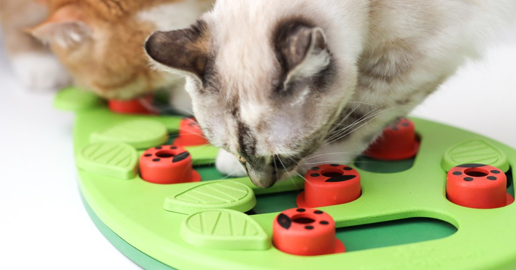 interactive-cat-toys-buggin-out