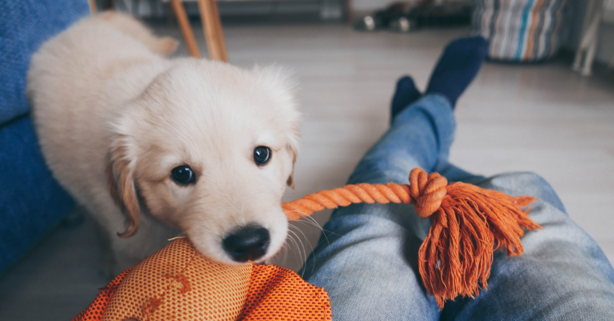 play with your puppy. puppy enrichment toys