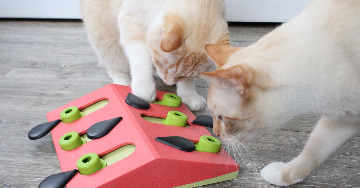 melon madness interactive cat toy