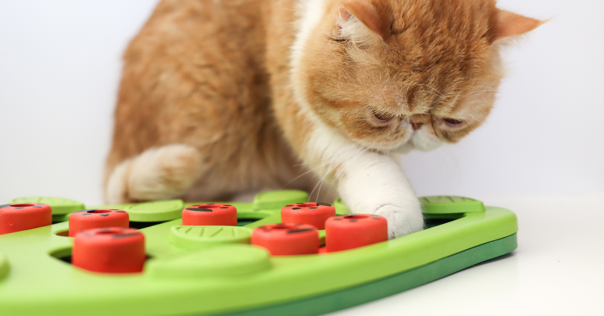 buggin ou tpuzzle game for cats