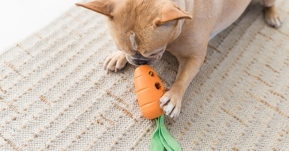dog with carrot stuffer