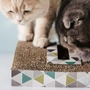 best cat toys for why do cats scratch