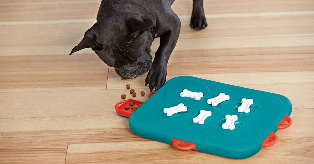 dog casino interactive dog toy