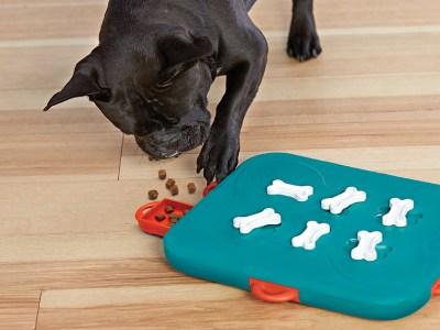 dog casino dog puzzle toy