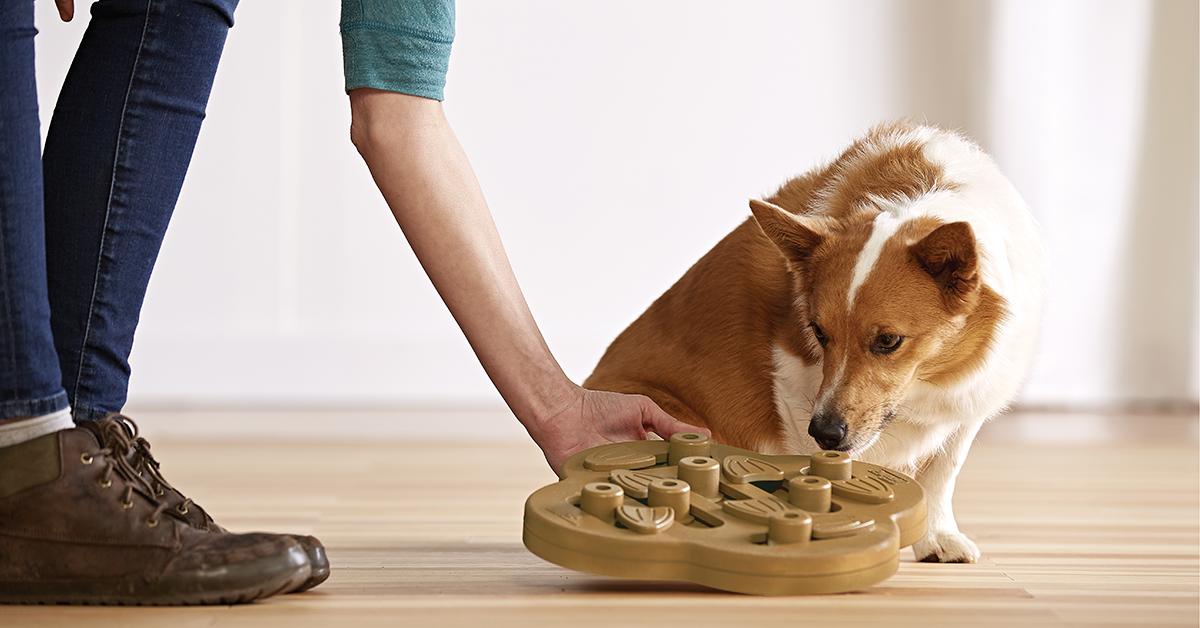 Nina Ottosson Hide N' Slide Dog Game