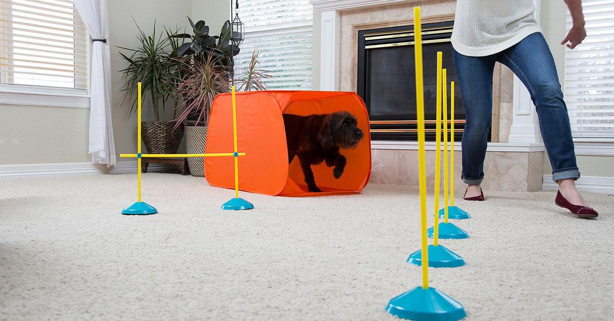 Outward Hound ZipZoom Indoor Agility Kit interactive dog toys