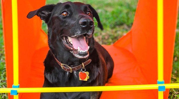 outward hound agility kit for dog exercise