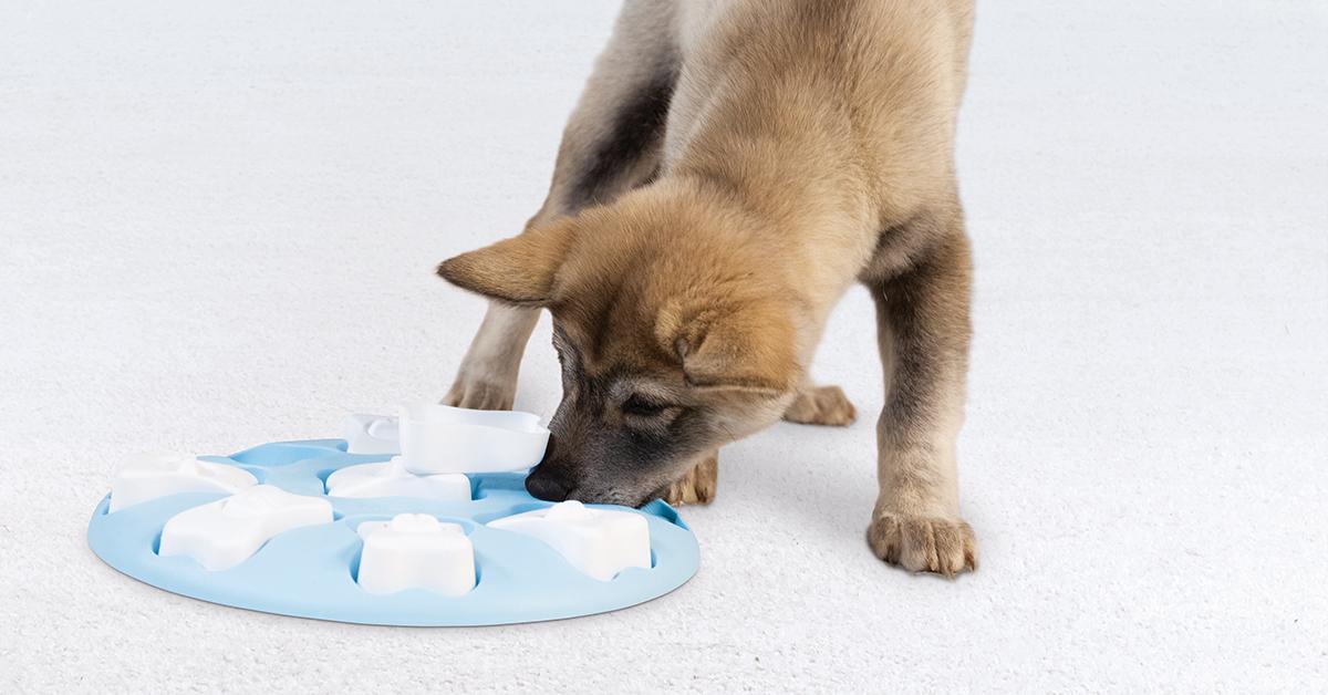 best dog puzzles puppy smart