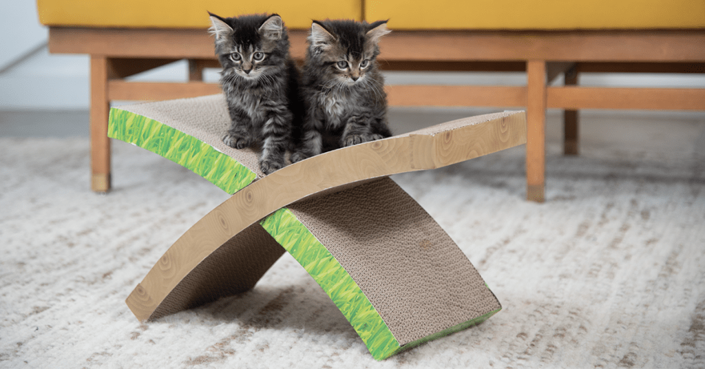 kittens on a scratcher