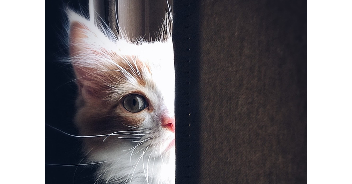 cat creeping