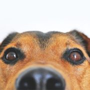 10 dog facts that may surprise you
