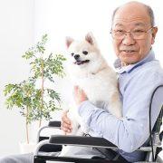 best-dogs-for-seniors
