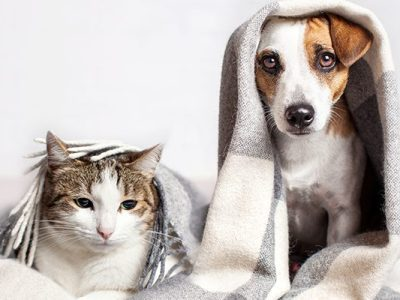 signs of stress in dogs and cats