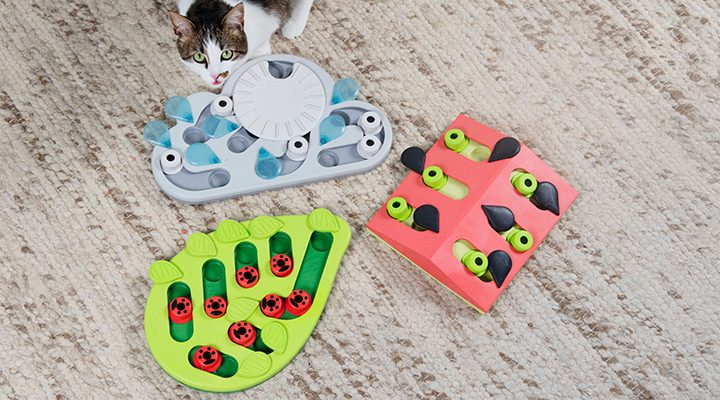interactive cat games and cat puzzle toys