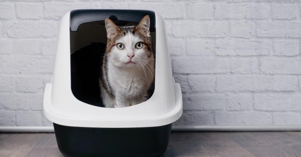 first time cat owner tips cat in litter box