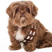 star wars day dog