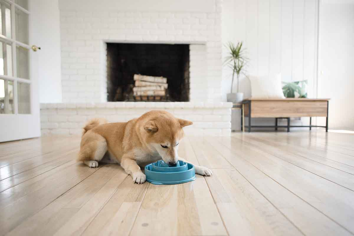 can dogs have greek yogurt