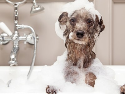 dog in a tub. how often should you give your dog a bath