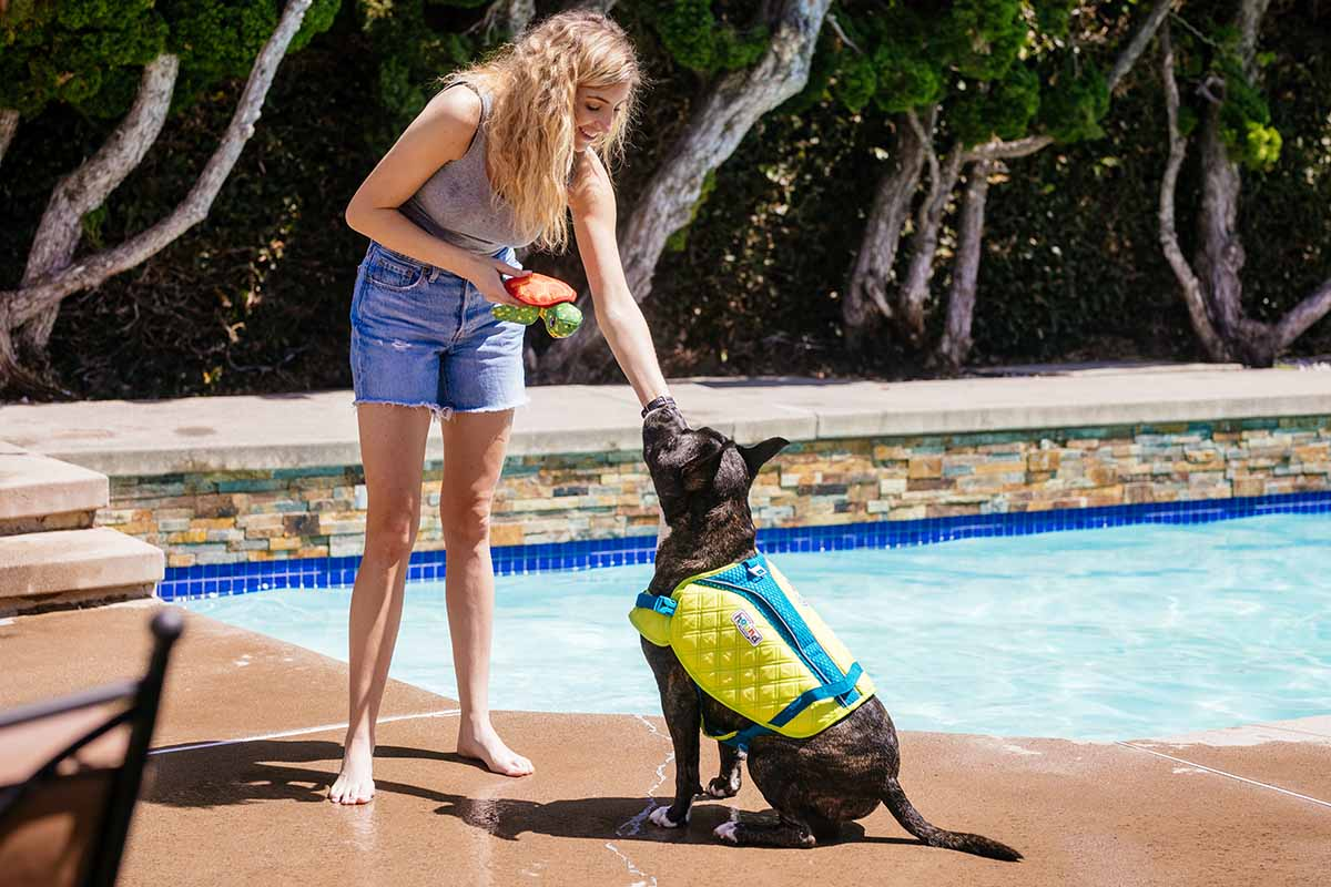 dog by the pool in a dog life jacket