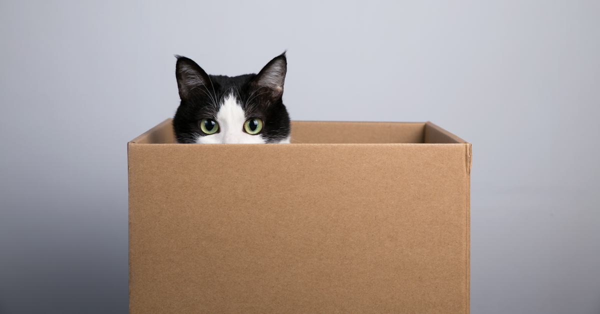 a cat in the box. why do cats love boxes?