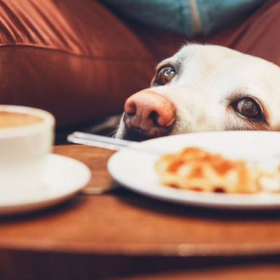 what toxins can cause seizures in dogs: caffine