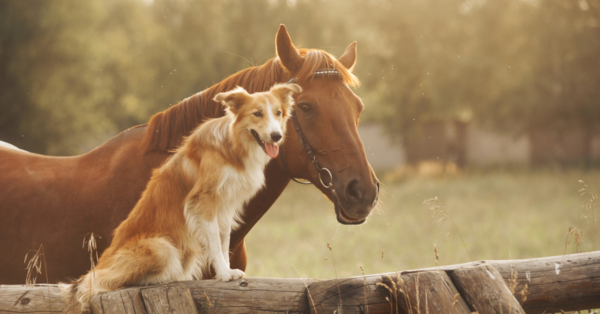 a pet horse and a dog