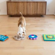 dog enrichment toys