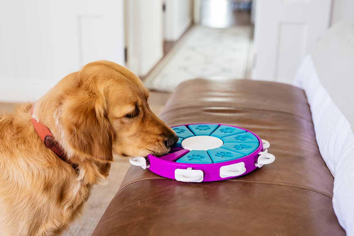 dog twister toy by nina ottosson