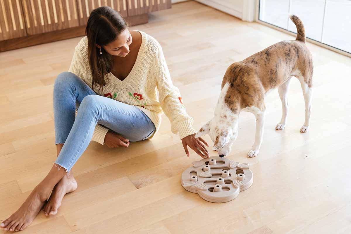 dog puzzle enrichment game