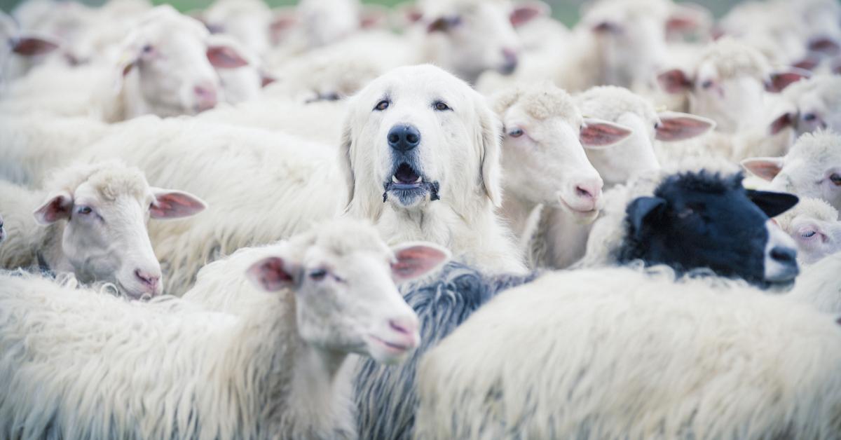 best toys for herding dogs