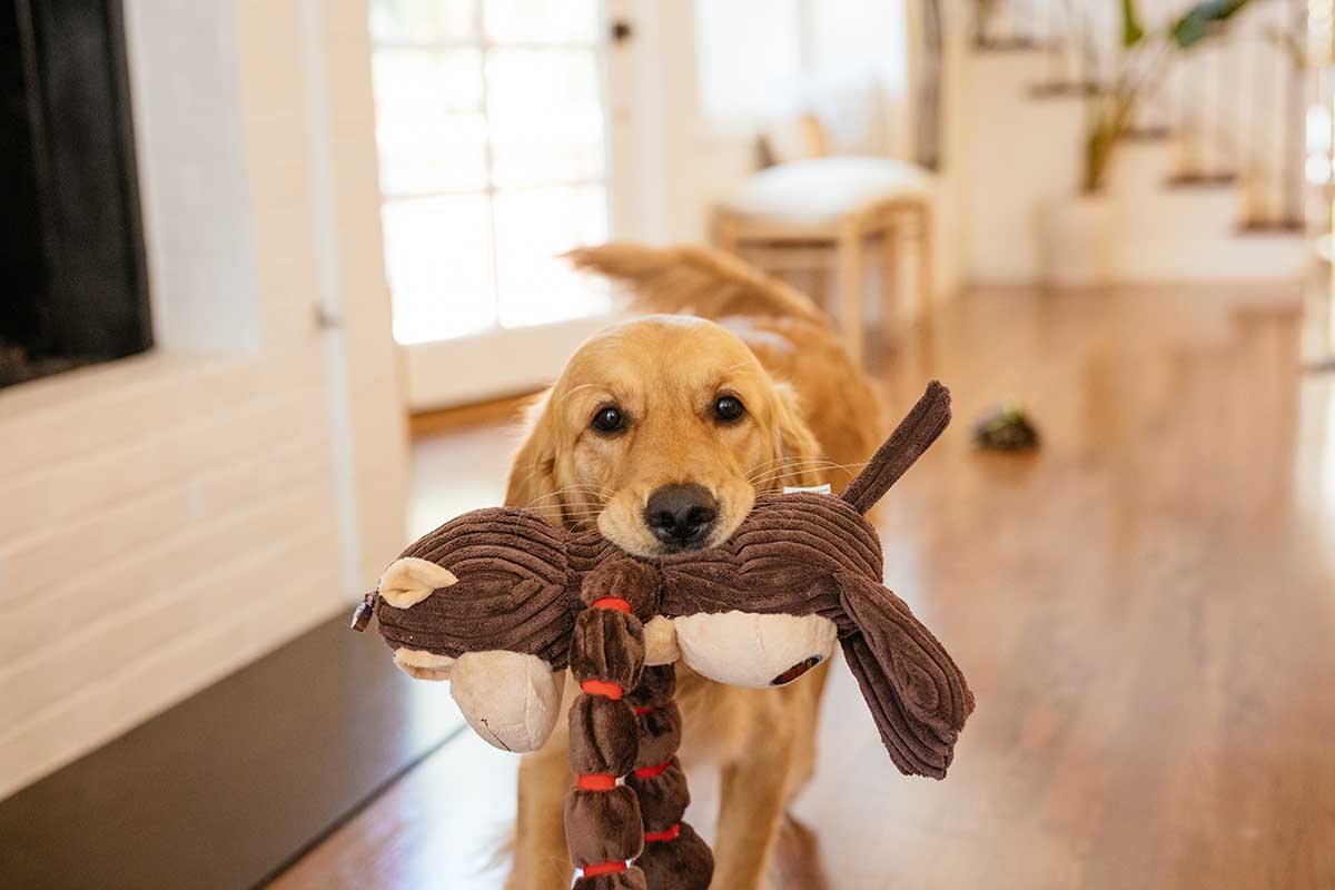 dog with toy in mouth