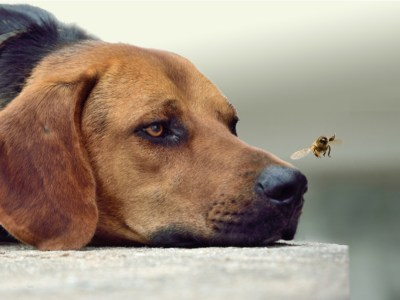 how to keep flies off dogs