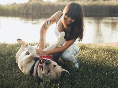 are dogs ticklish