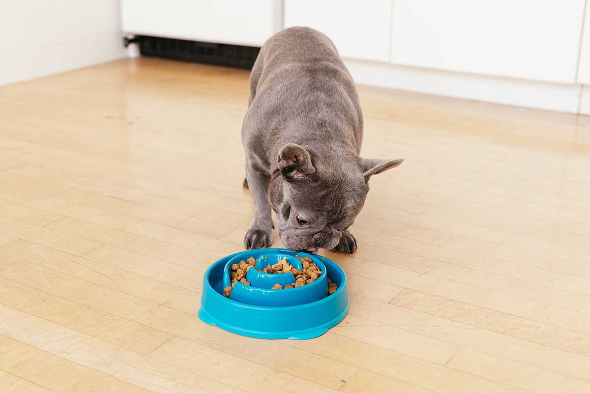 dog eating dog food out of slow feeder bowl