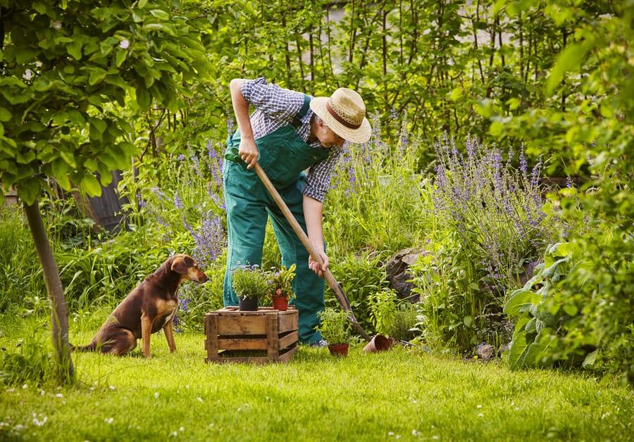 dog and man gardening