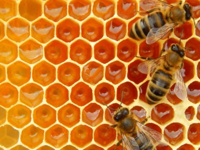 bee hive and honeycomb
