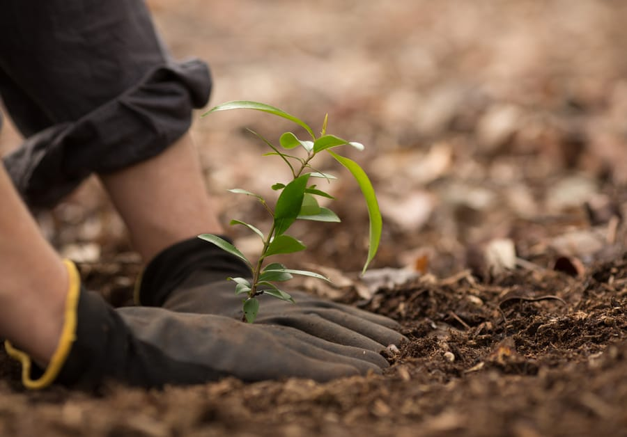 person planting