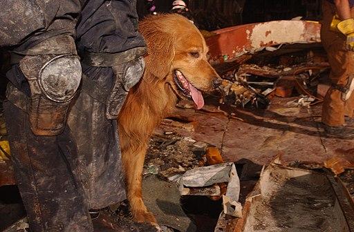 9/11 dog riley