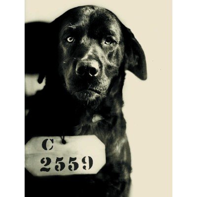pep the eastern state penitentiary dog