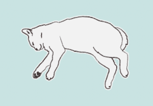 cat sleeping positions sideways