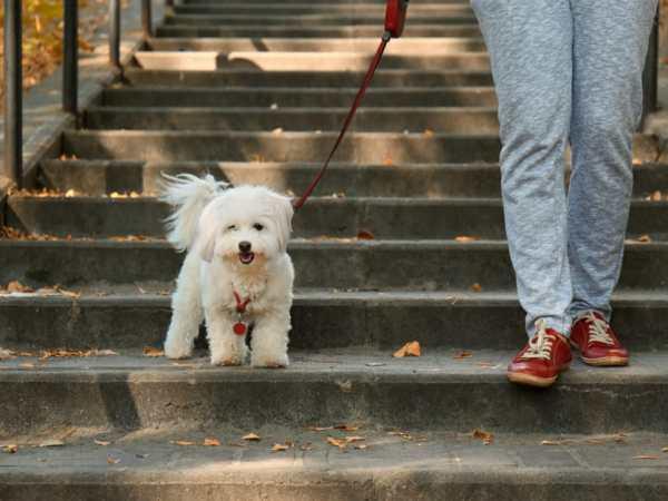 dog on a walk with human