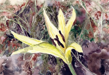 Glacier Lily in Yellowstone