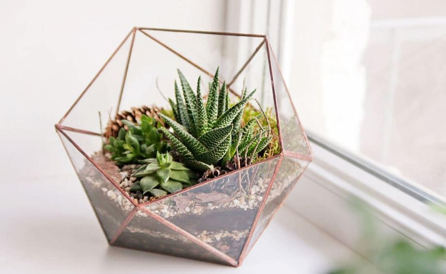 Plantas de interior en decoracin tipos y consejos para casa